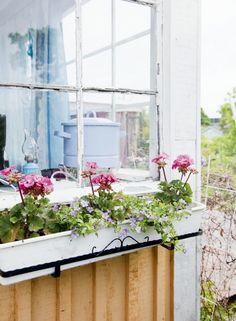 Keittiön ikkunan ulkopuolella kukkivat pelargonit ja siniset lumihiutaleet. | Unelmien Talo&Koti Kuvat: Juho Huttunen Toimittaja: Anna Pirkola