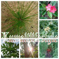 #garden #Kuwait #nature