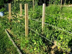 Stake and weave technique: trying this method of tomato support this season. Stake and Weave-Technik Tomato Trellis, Tomato Cages, Tomato Garden, Garden Trellis, Tips For Growing Tomatoes, Growing Tomato Plants, Farm Gardens, Outdoor Gardens, Tomato Support