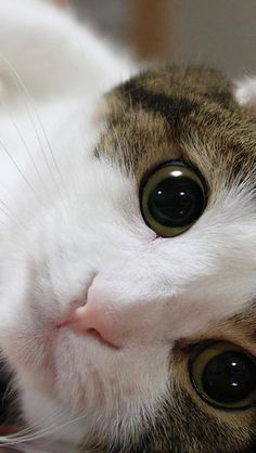 Cat's beautiful eyes.