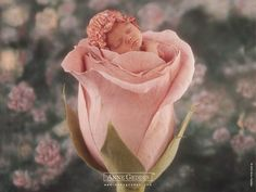 adorable baby photography