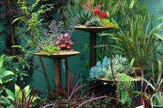 danger garden: Percolating…plow discs DIY afforable in the feed store galvanized top for bird feeder