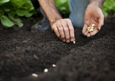Hold a Beltane Planting Ritual for Solitaries: Use this spring planting ritual to reconnect with the soil.