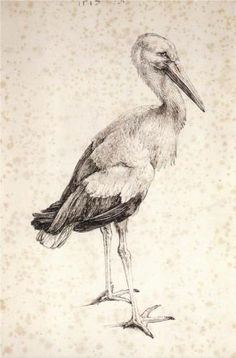 """Stork"" by Albrecht Durer, Style: Northern Renaissance, Genre: animal painting. Art And Illustration, Art Illustrations, Watercolor Illustration, Renaissance Kunst, Italian Artist, Art Graphique, Art Plastique, Bird Art, Painting & Drawing"