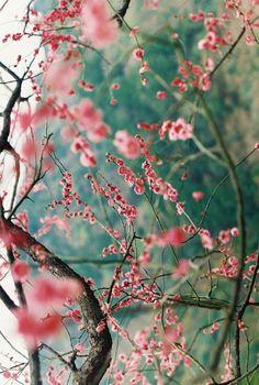 Nice almond blossoms.