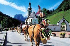 Almabtrieb von der Kallbrunnalm der Ramsauer Bauern am 14. September - Berchtesgadener Land Blog