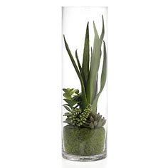 Heh - I can do this! But when in doubt go to Z Gallerie.Succulent In Glass Vase | Floral | Accessories | Z Gallerie