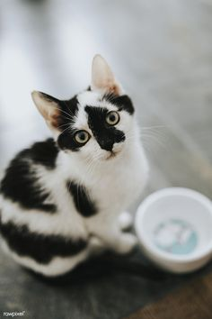 They are not a separate breed. Yet, they have some unique characteristics that make them stand out in these Attractive black and white cat Pictures. White And Black Cat, White Cats, Black Cats, Warrior Cats, Pretty Cats, Beautiful Cats, Animals Beautiful, Black Cat Aesthetic, Animals And Pets