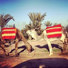 The locals. #Maroc