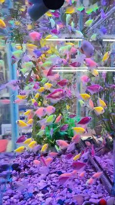 Wallpaper Nature Flowers, Beautiful Landscape Wallpaper, Beautiful Flowers Wallpapers, Beautiful Rose Flowers, Flower Phone Wallpaper, Galaxy Wallpaper, Cool Pictures Of Nature, Beautiful Photos Of Nature, Most Beautiful Animals