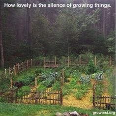 How lovely is the silence of growing things. @elisadehan doesn't this remind you of Anne's PEI?