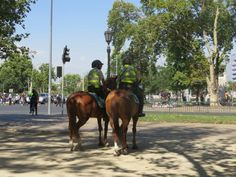 Policía a caballo chile Chile, Cow, Horses, Animals, Pictures, Animales, Chili, Animaux, Chilis