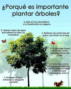Infografía: ¿Porqué es importante plantar árboles?