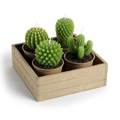 4 bougies cactus + support bois