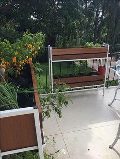 Horta em casa #horta #floreiradehorta #caixote #madeiracaru