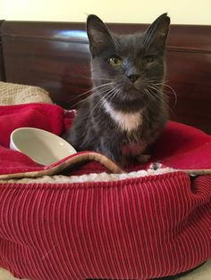 A super senior cat found herself in the shelter at the age of 23. When a volunteer started petting her, she was so happy to be loved that she couldn't stop purring. Meet Miss Ora!CACC Cat Transfer TeamThis old gal had been with her human since 1994, but for whatever reason she was surrendered to the...
