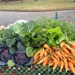 Huerto en casa: Como plantar y cultivar zanahorias