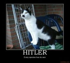 I have a Kitler of my own!