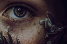 Plantae by Cristina Hoch