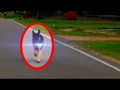 From birds disappearing to a ghost cat vanishing on security footage, this video investigates the top 5 animal teleportations that have been caught on tape. Paranormal Stories, Paranormal Photos, Ghost Pictures, Ghost Pics, Funny Pictures, Creepy Ghost, Ghost Cat, Unexplained Phenomena, Remote Viewing