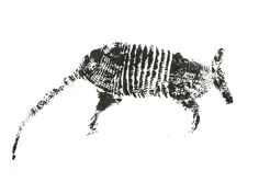 The Inked Animal Project : armadillo