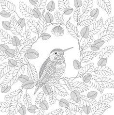Millie's Animal Kingdom: Amazon.de: Millie Marotta: Fremdsprachige Bücher: Birds