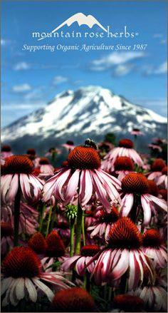 Mountain rose herbs Summer 2012 Catalog