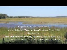 Hem About RSS Flöde Mary Oliver – The Summer Day Leave a comment Mary Oliver reads her poem The Summer Day from New and selected poems Mary Oliver Quotes, Kids Poems, Poem Quotes, Quotable Quotes, After Life, Body Love, Spoken Word, Before Us, So Little Time