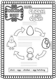 1000+ images about Life Cycles on Pinterest | Life Cycles, A ...