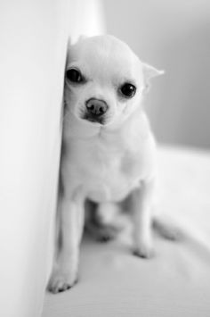 So Cute!  This Puppy Looks  Just Like  My Puppy