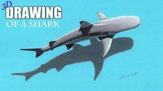 Real Time Drawing: 3d Shark  | Jasmina Susak