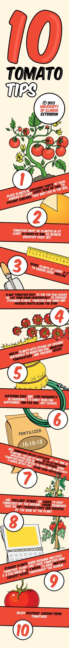 10 Tomato Tips for Growing the Perfect Tomato