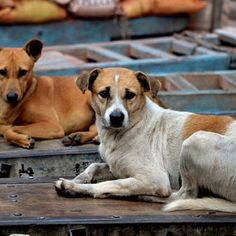 Terrorists can use stray dogs for attack: DIAL @darwinsnews #darwin