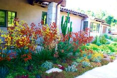 Deanna Foster Design: Landscaping with Succulents. Read more at sgplants.com