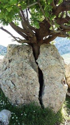 Nature Untitled