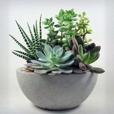 Concrete planters and garden ornaments, such as small water features, are easy to make and are a wonderful way to add interest to the garden. Buying ready made can be expensive, but one bag of cement goes a long, long way!