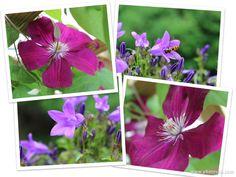 lilac flowers #lila, #flower #bee