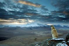 """Found this beautiful photo posted on Facebook. I don't know who the author is. It was written in the description that this dog was following some trekkers up and down the Himalaya terrain for a couple of weeks and decided to go with one of them up the mountain and onto this top. He sat there peacefully for 30 minutes. It reminded me of what Emily Dickinson wrote: """"You ask of my companions. Hills, sir, and the sundown, and a dog as large as myself."""""""