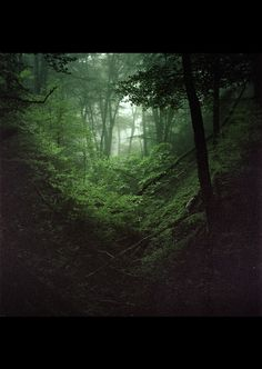 Traverser le jardin et enjamber la palissade. Descendre dans les herbes hautes jusqu'au bout du pré, entrer dans le bois. C'est ici que commence l'aval.Quelques petits kilomètres au travers de la forêt percée de clairières, un chemin qui n'existe pas en…