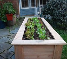 Lettuce table for growing vegetables right on the patio. :: Hometalk