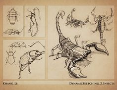 Dynamic Sketching Insects by elgnahk on DeviantArt