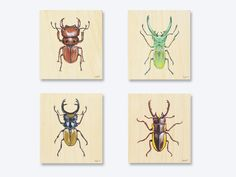 Botanical Insect collection