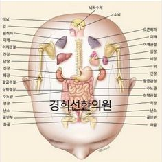 Head reflexology points. I include some of these points when I'm giving a face and ear reflexology session. These points are essential for… Reflexology Points, Reflexology Massage, Acupuncture Points, Acupressure Points, Cupping Therapy, Massage Therapy, Animal Reiki, Diy Beauty Treatments, Acupressure Treatment
