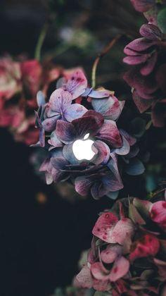 Photo from Annie Spratt on Hydrangea love. Photo from Annie Spratt on Hortensia Hydrangea, Blue Hydrangea, Hydrangeas, Purple Flowers, Hydrangea Bush, Dark Flowers, Colorful Flowers, Hd Flowers, Hydrangea Macrophylla