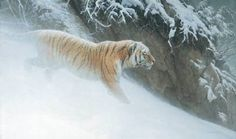 Artist: Robert Bateman, Title: Momentum Siberian Tiger - click for larger image