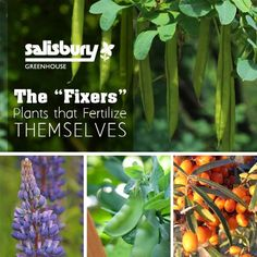 "The ""Fixers"" Plants that Fertilize Themselves - By Rob Sproule, Salisbury Greenhouse #Plants #Fixers #Fertilize"