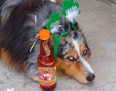 Drink Dog Beer Responsibly!
