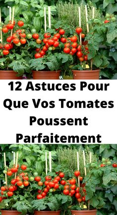Terrarium Plants, Garden Plants, Growing Seeds, Permaculture, Small Gardens, Horticulture, Vegetable Garden, Farmer, Planting Flowers