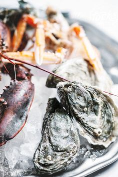 presentation & close up shots of a variety of sea food. we can place them on ice along with metallic objects