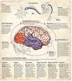 The aging brain & how we can keep those connections, and our brain function, intact for longer.